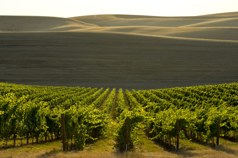 Spring Valley Vineyard - Washington Wine at The Lodge at ...