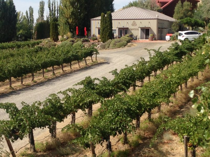 Tapteil Vineyard Winery near Lodge at Columbia Point