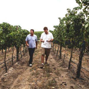 Two men walking in a vineyard