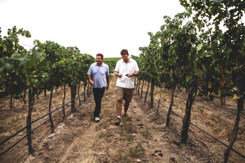 Two men walking in a vineyard