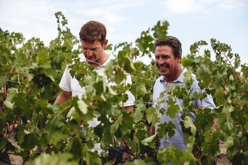 Laughing in the vineyard