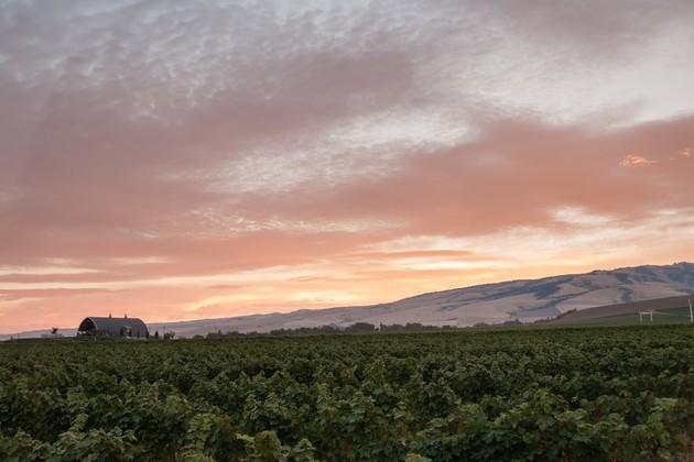 Smokey Rose Cellars Vineyard